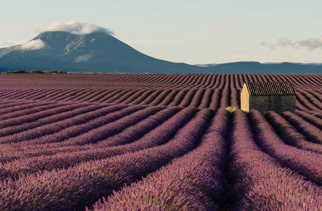 Getting-to-Lavender-Fields-from-Manosque